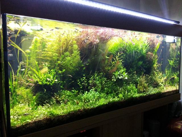 Mes (plus) de 60 plantes dans mon 240 litres - Page 2 11940120131220192708