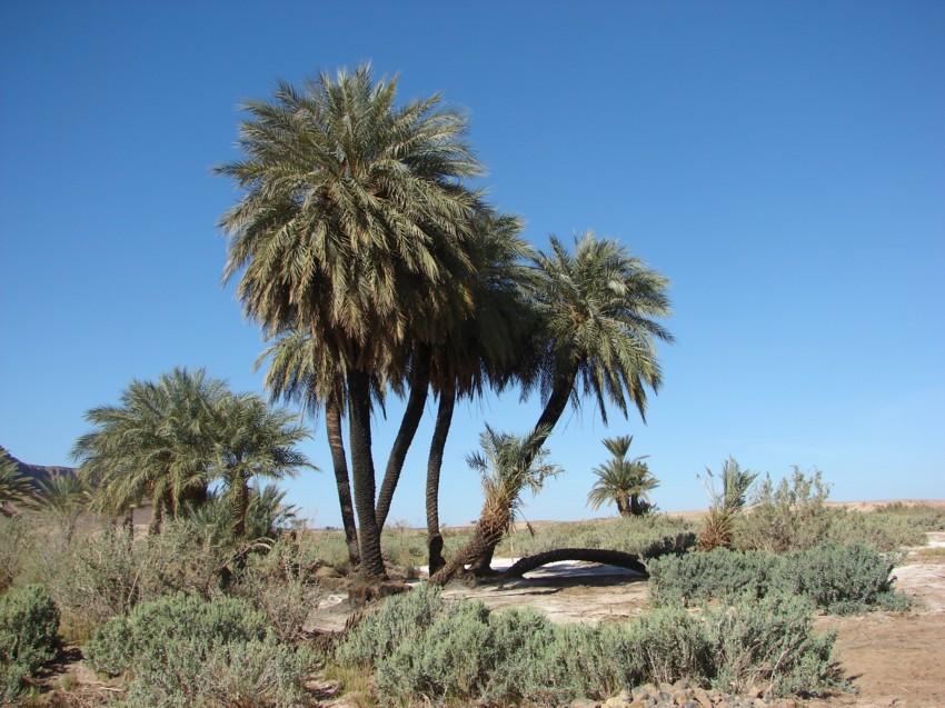 Le Grand Sud du Maroc - II 119887136