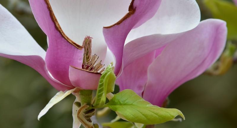 Toutes ces fleurs qui embellissent nos regions  123368034