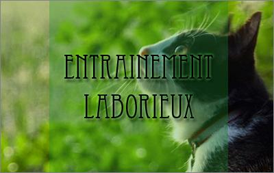 Entrainement laborieux [PV:Corn] 123633Entrainementlaborieux