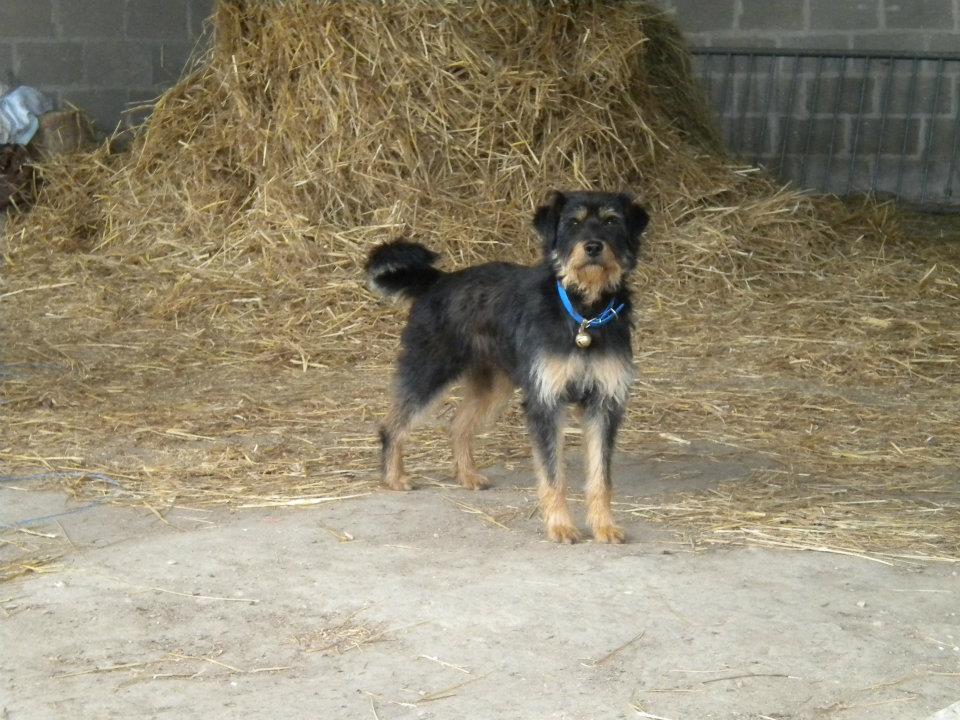 Urgence pour un chien croisé Griffon 125595email5