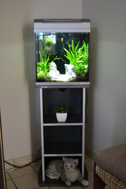 MES AQUARIUMS 240 L Communautaire et 30 L Aquascape + photos - Page 3 1260522915
