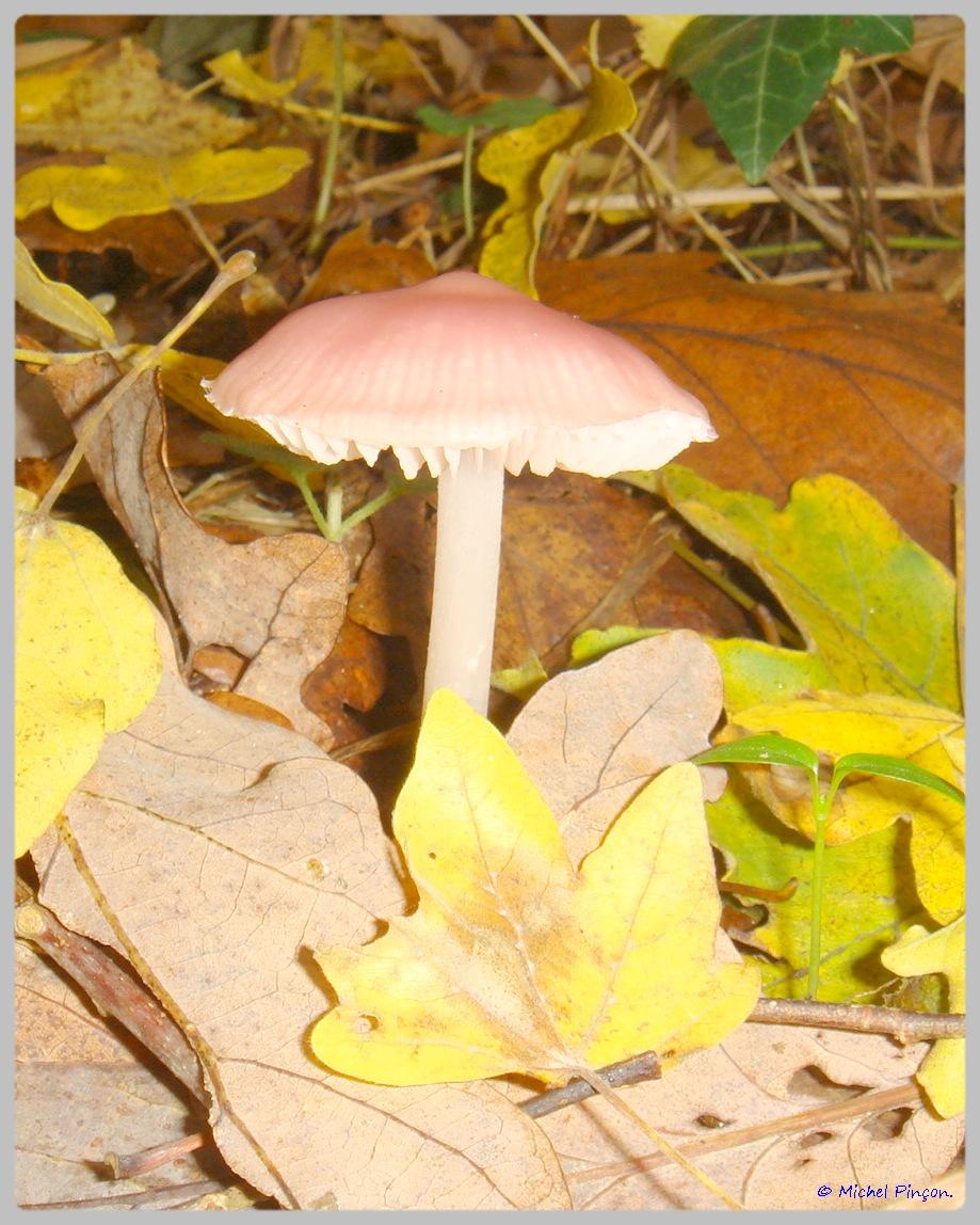 [fil ouvert] les champignons - Page 5 126691DSC011565