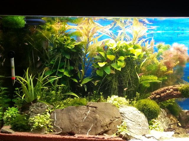 mon 240 L aquascaping 127027grosplancotgaucheaquarium