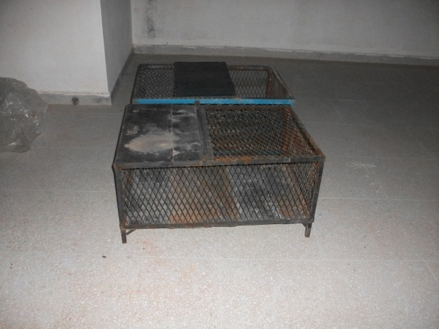 enclos pour juvénile greacas  129049DSCF1835