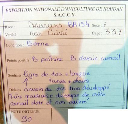 exposition d'aviculture Foire ST MATTHIEU 27 et 28 Septembre 2014 - Page 3 129371P1150687