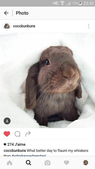 Nos lapins ne sont pas orphelins! Où sont les fratries? 13004020160608214026