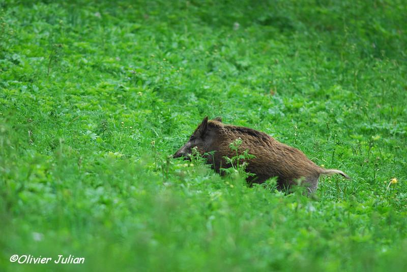 Quelques photos animalières.. 130488DSC4558