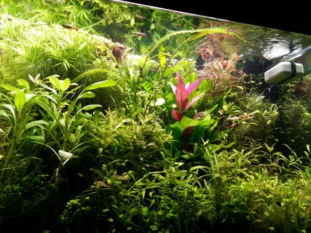 Mes (plus) de 60 plantes dans mon 240 litres - Page 4 13084520140713203016
