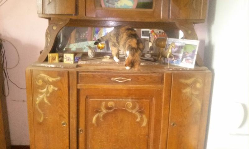 DUCHESSE - chatte femelle, née 2011/2012, borgne - (PASCANI) - adoptée par Chantal Pascal (dpt 63) - Page 4 13183420151206115505