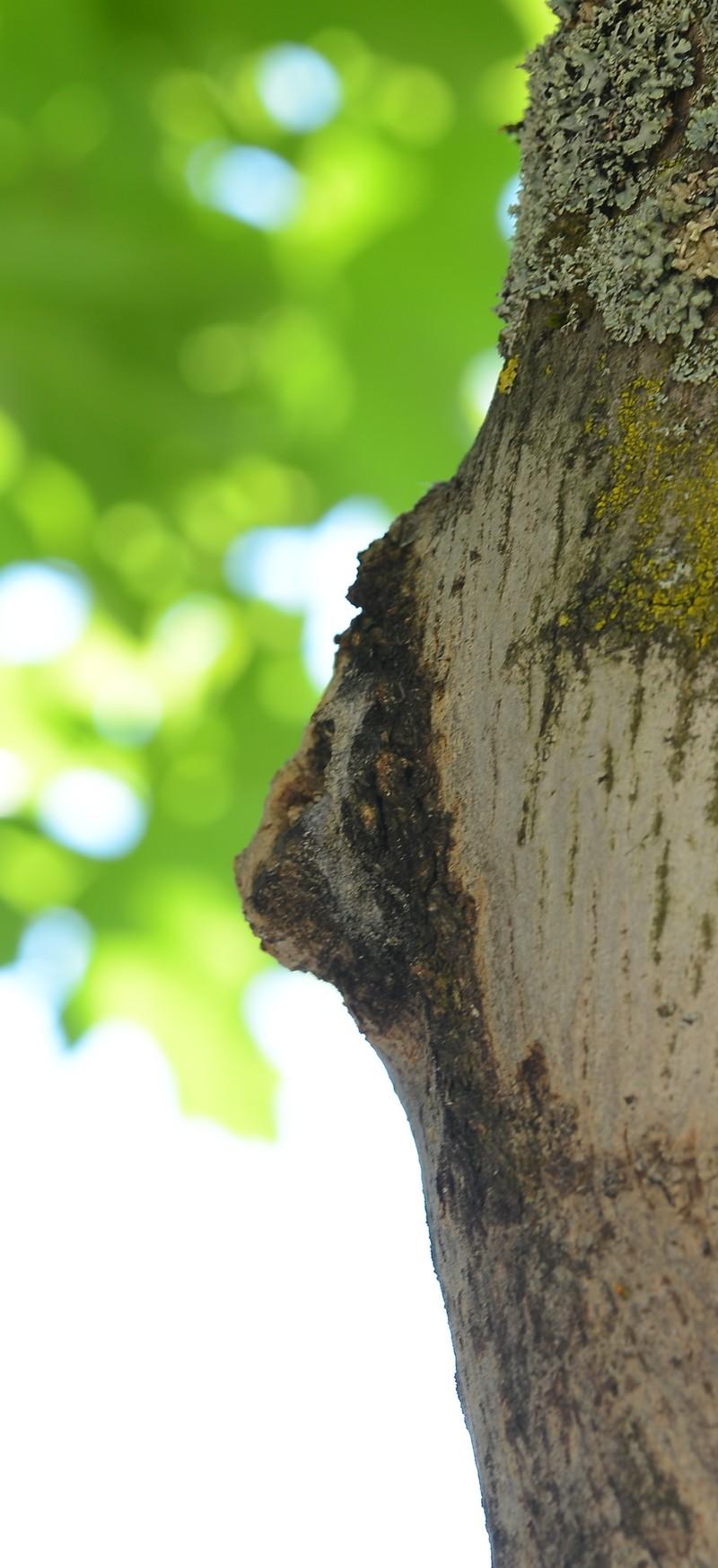 étrange nature - Page 2 134933017