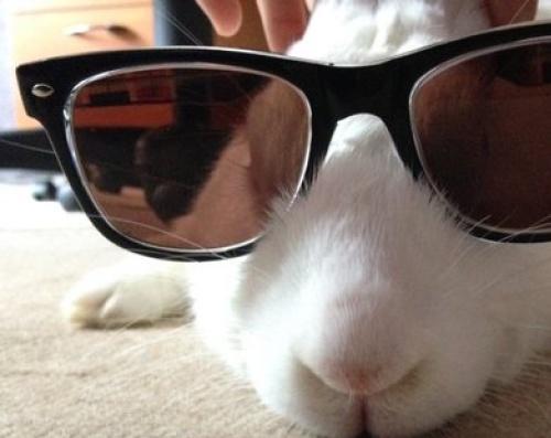 Association White Rabbit - Réhabilitation des lapins de laboratoire - Page 3 136181arwen