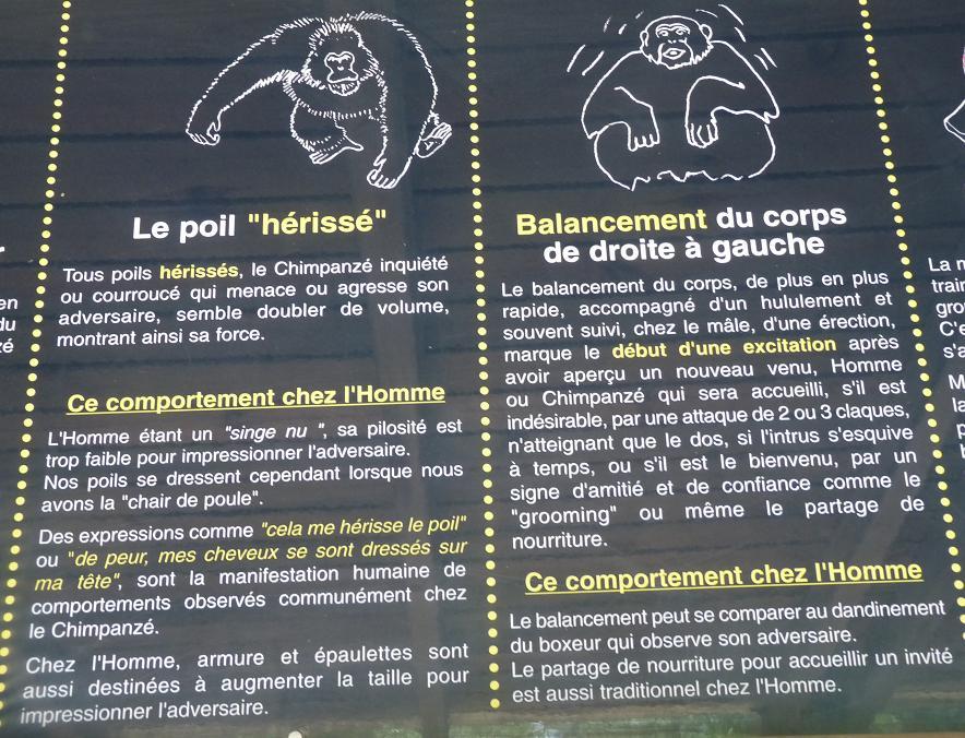 """NARBONNE EN PASSANT PAR LA RESERVE AFRICAINE DE SIGEAN C"""" EST  DROLEMENT FUN - Page 5 140790P1180326"""