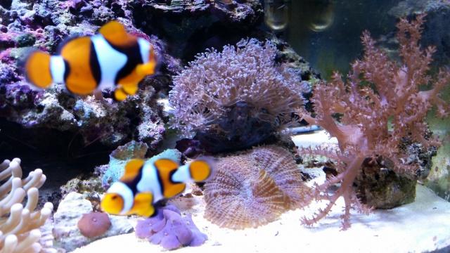 Mon premier aquarium eau de mer - Page 3 14344120141201144511