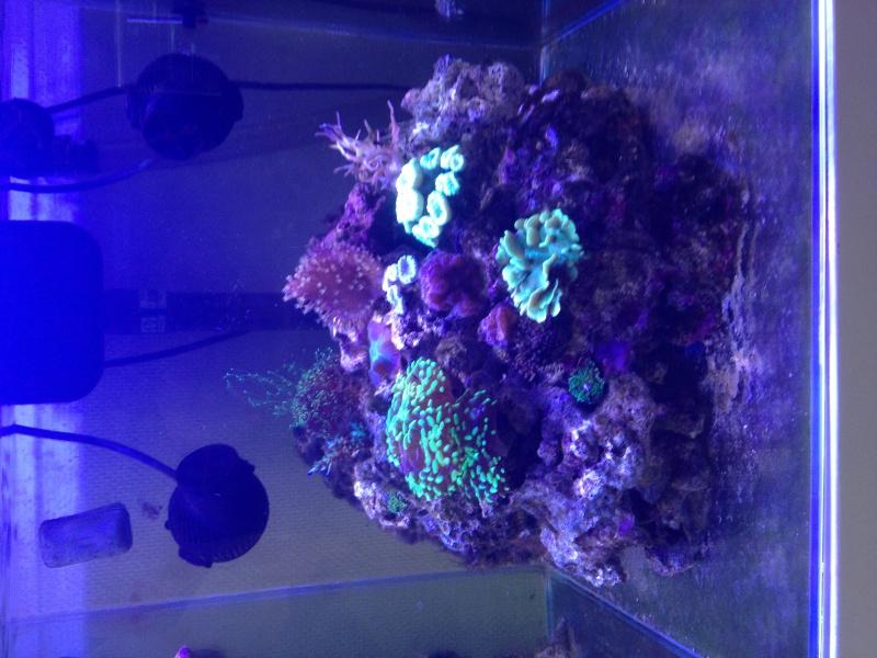 Aka's Reef Cube ! 144671IMG2149