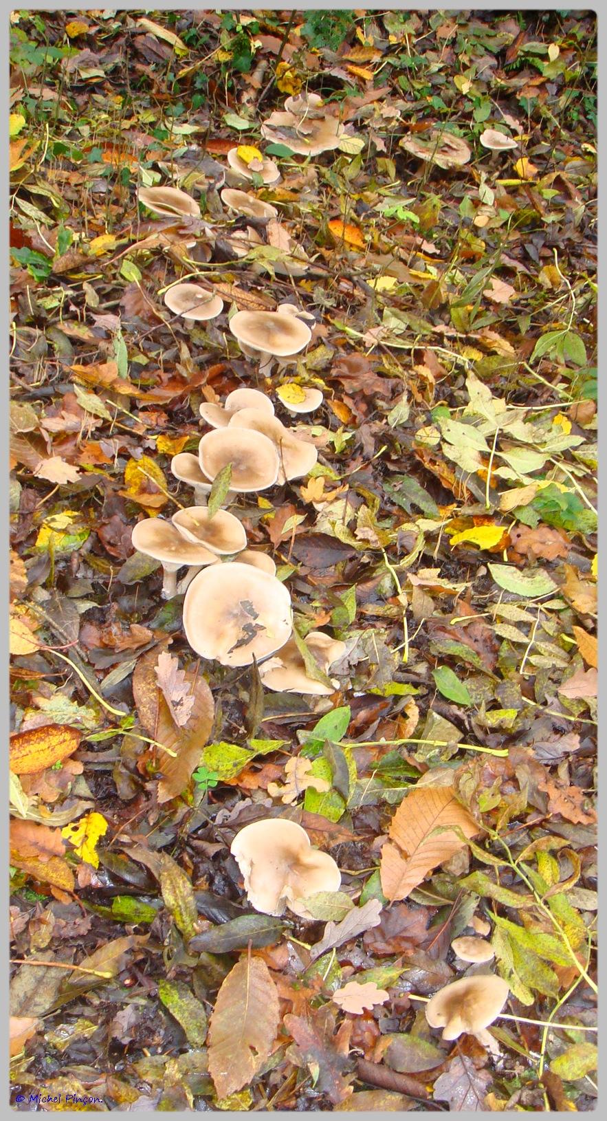 [fil ouvert] les champignons - Page 5 146692DSC011570