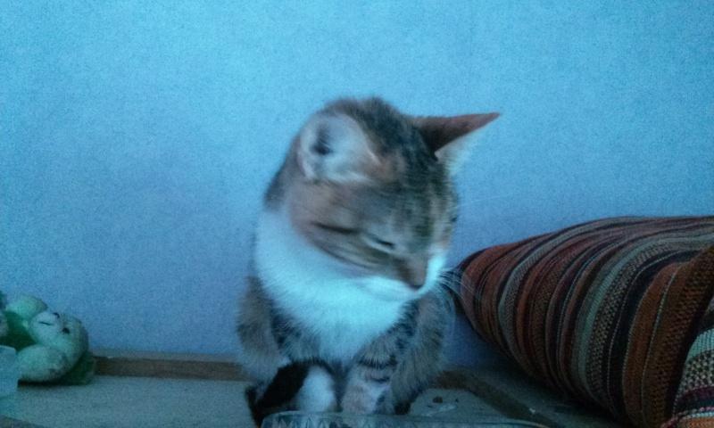 DUCHESSE - chatte femelle, née 2011/2012, borgne - (PASCANI) - adoptée par Chantal Pascal (dpt 63) - Page 4 14849365