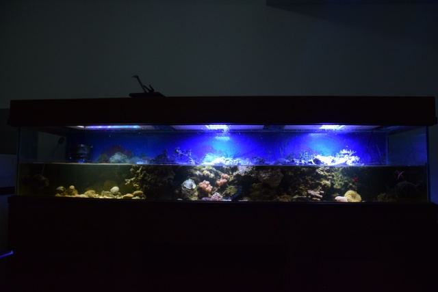 Le nouveau bac du Poissonpané : aquaterrarium de 900L / Nouvelle Calédonie - Page 2 152025DSC0077