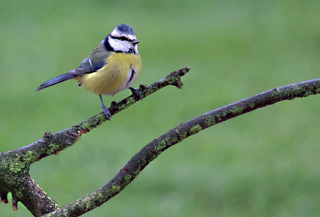 Mes oiseaux 153212291