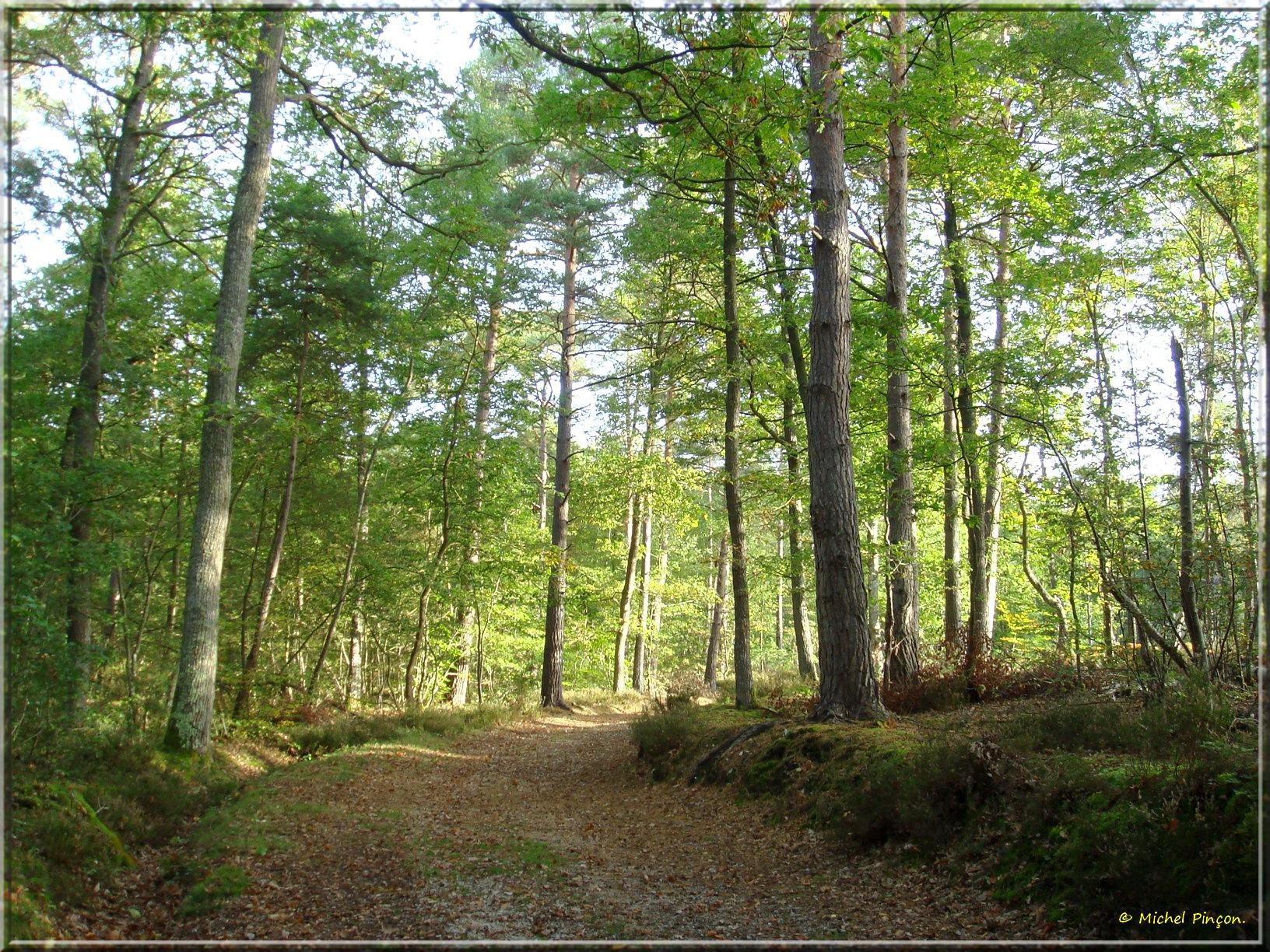 [fil ouvert] la forêt dans tous ses états - Page 14 153451DSC013905