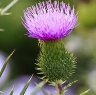 Les fleurs (ou plantes ) contre le cancer. 15358920160607091311