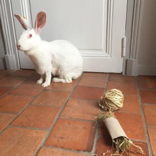 Association White Rabbit - Réhabilitation des lapins de laboratoire - Page 4 155162121159728785165555738184370161304894001934n