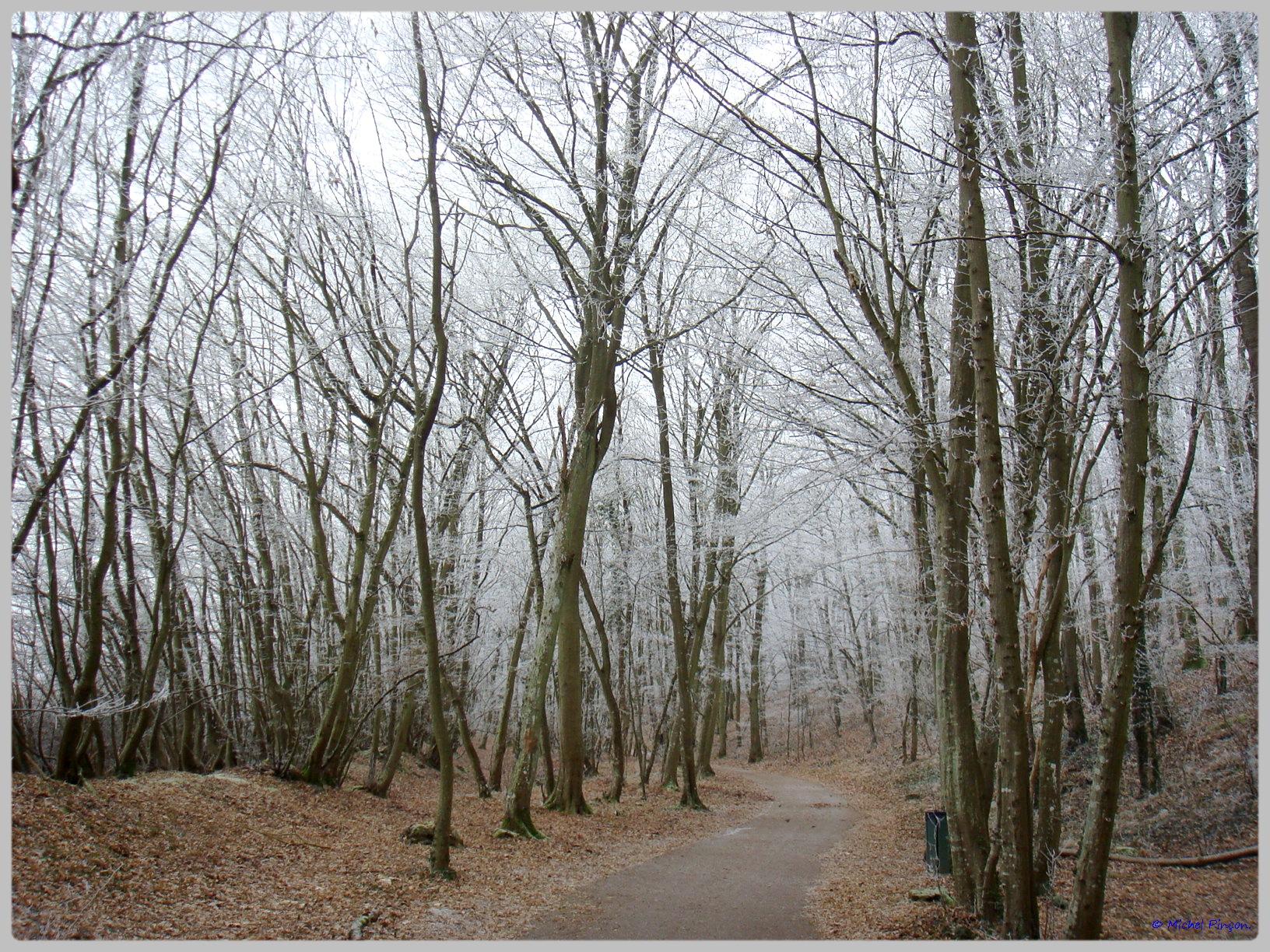 [fil ouvert] la forêt dans tous ses états - Page 12 156123DSC011767