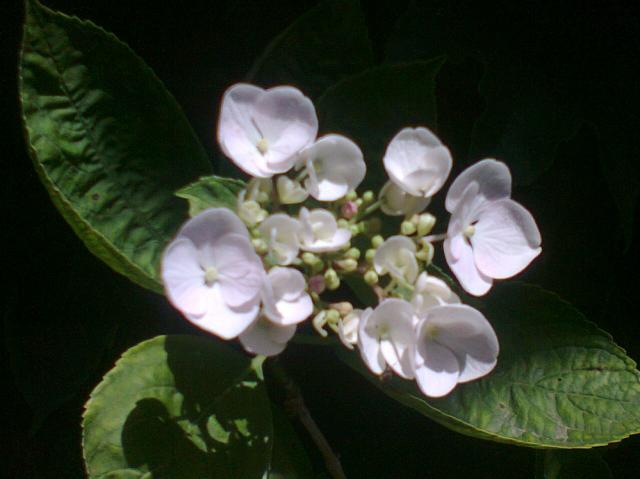Fleurs  157268fleur