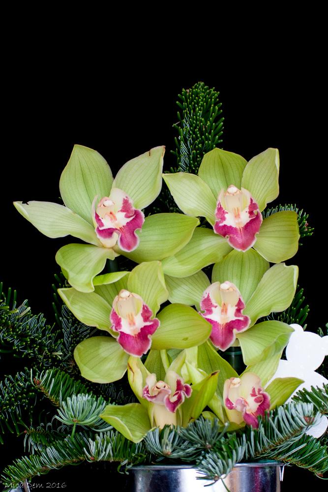Dans le monde des orchidées ... + Suite 159336michaeldemarsphotography0954