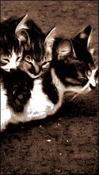 EXPLOIIIIIIIIIIT ! La galerie de THEOLA (Asuna), EN DIRECT !  - Page 2 161061Catsbymorcus