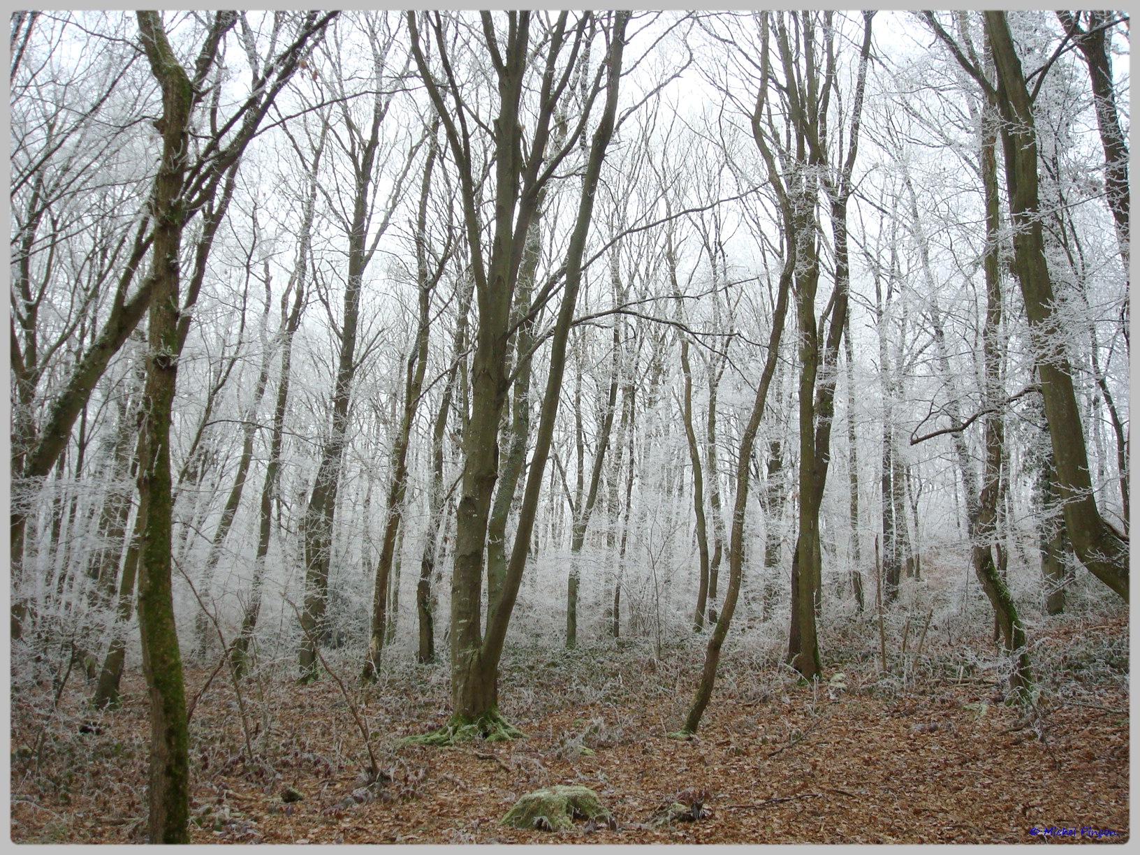 [fil ouvert] la forêt dans tous ses états - Page 12 161538DSC011769