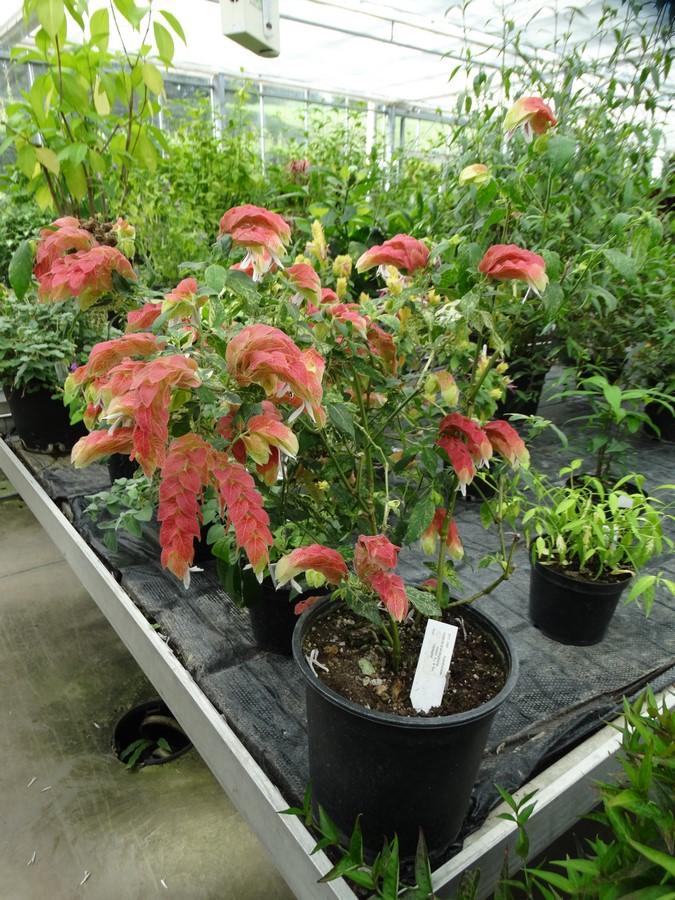 [Fil ouvert] Fleurs et plantes - Page 6 162152122Copier