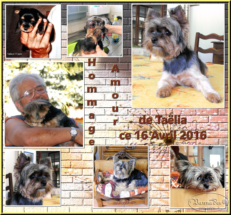 HOMMAGE pour mes Sept chiens 169303HommageAmourdetalia