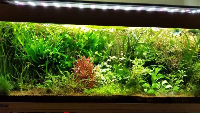 Mes (plus) de 60 plantes dans mon 240 litres - Page 7 17410520150315074512