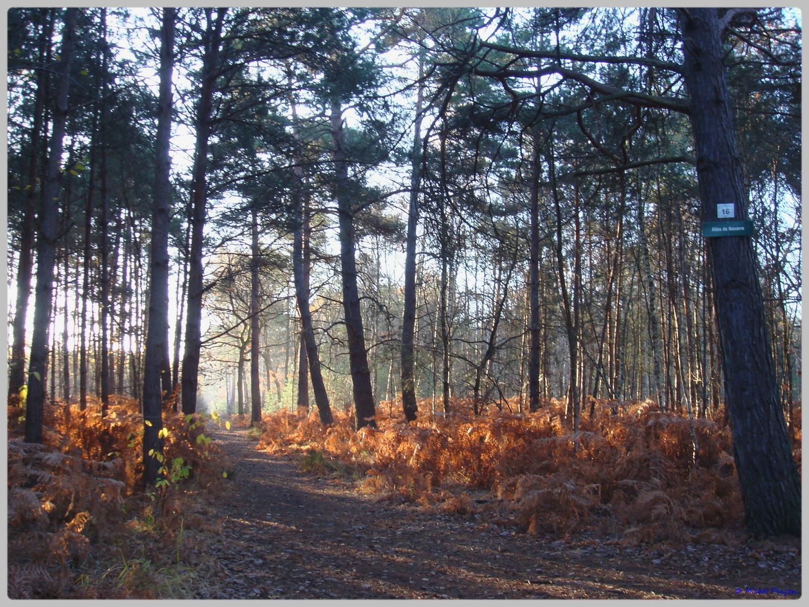 [fil ouvert] la forêt dans tous ses états - Page 10 176103DSC011628