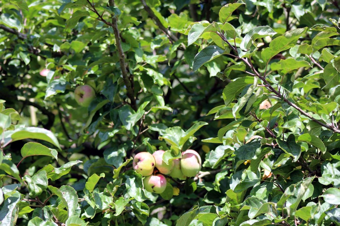 [Fil ouvert] Fruit sur l'arbre - Page 9 178393009Copier