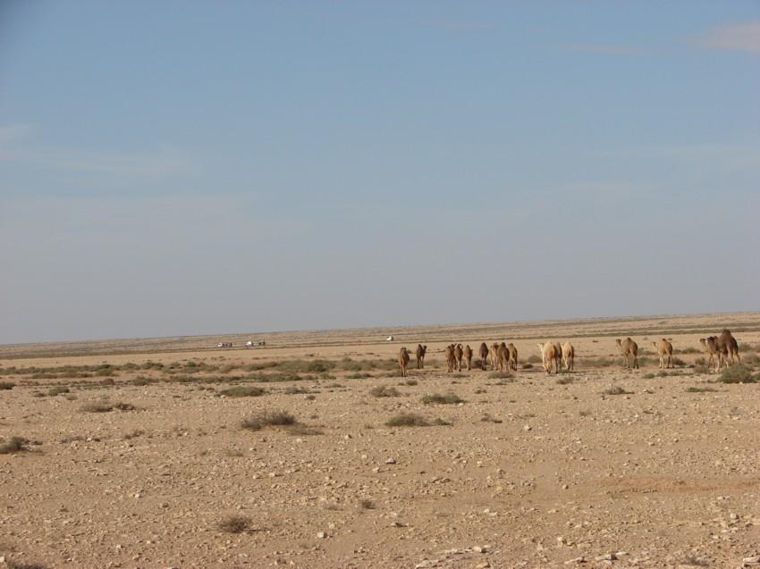 retour maroc 2012 - Page 2 184928015