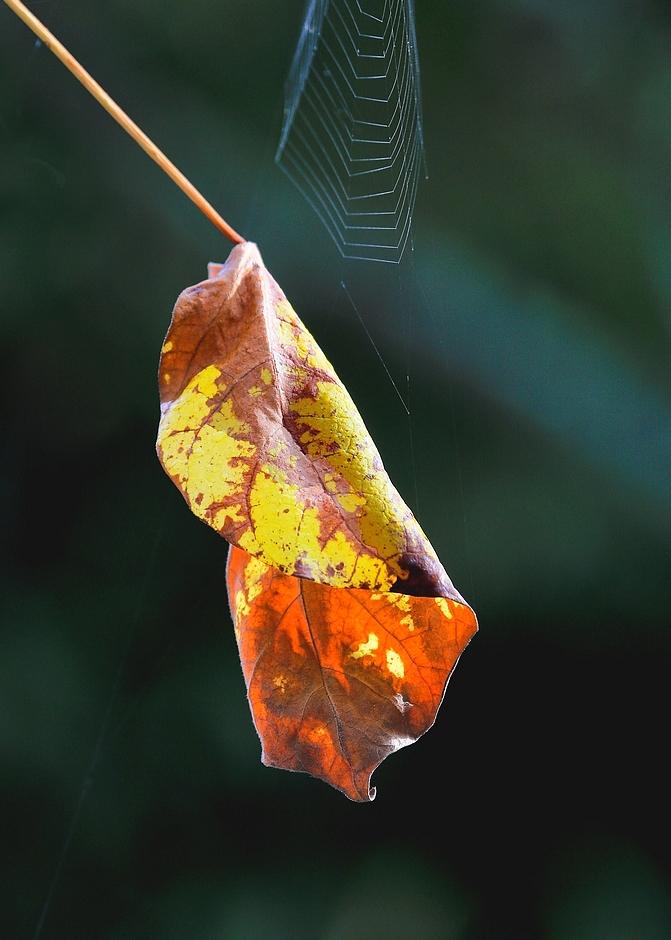 L'automne est bien parti !!!! 192077Lautomne1