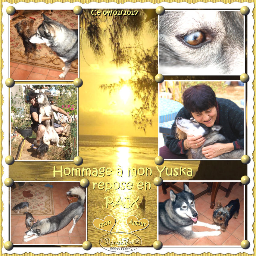 HOMMAGE pour mes Sept chiens 193968HommagemonYuska