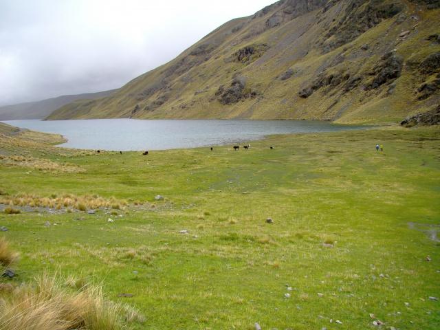 Les écosystèmes boliviens en photos... 199946bofedale4300m1