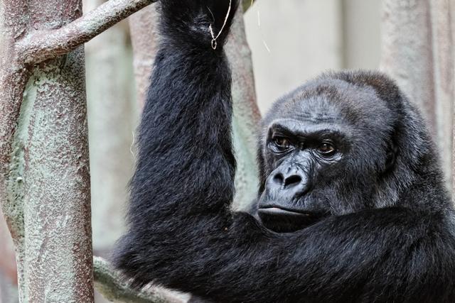 Le zoo de Bâle 199950ZooBleavril2012640x480022