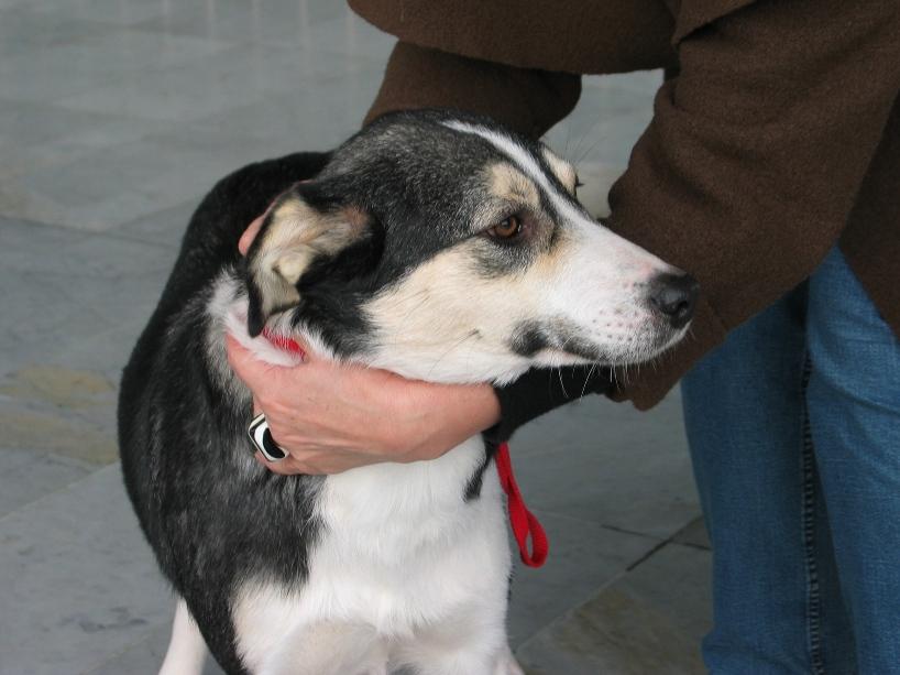 Spike, né en 2005, 7kg, très attaché à l'homme  202819IMG6742