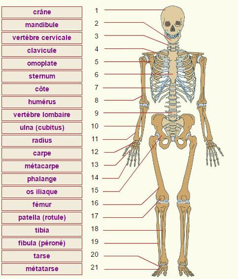 Guide RP du CHU - Page 2 204529Squelette