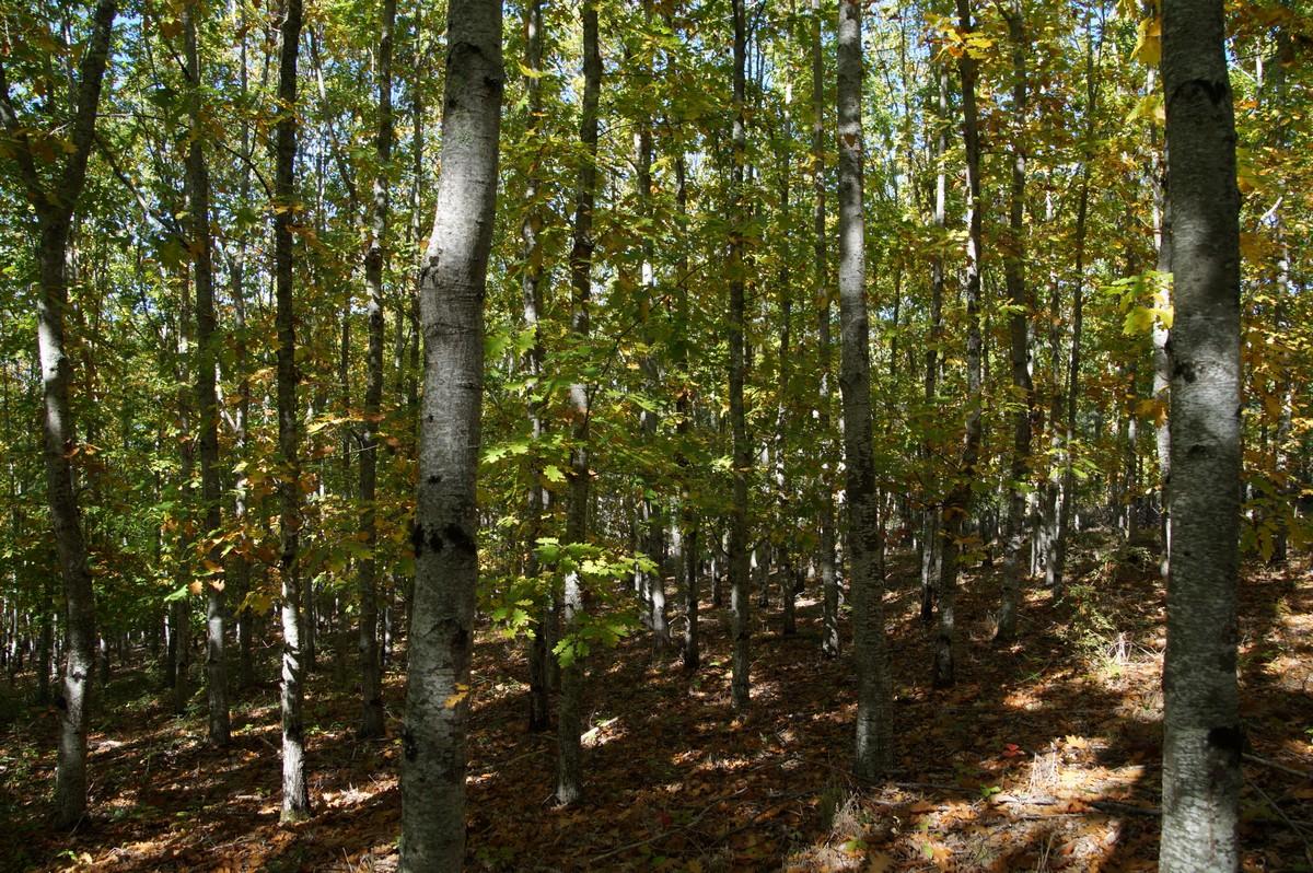 [fil ouvert] la forêt dans tous ses états - Page 14 205979DSC07712