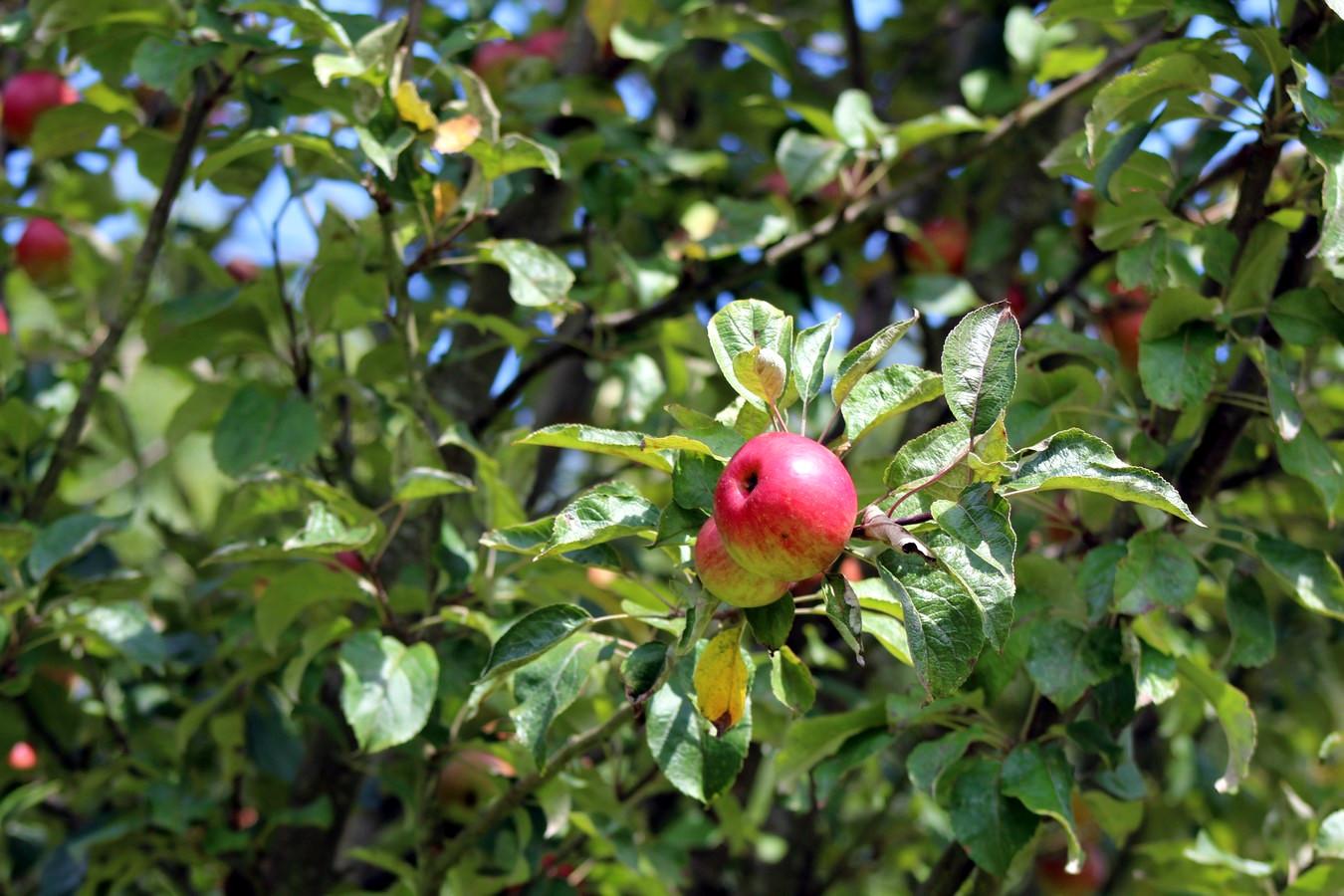 [Fil ouvert] Fruit sur l'arbre - Page 9 209311013Copier