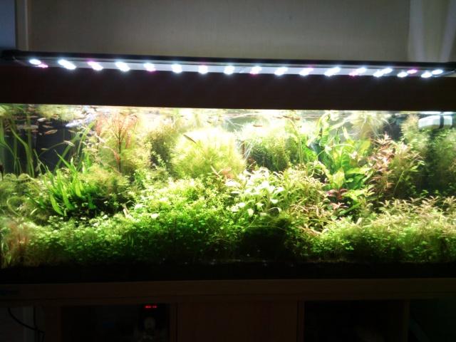 Mes (plus) de 60 plantes dans mon 240 litres - Page 4 212635IMG20140614160653