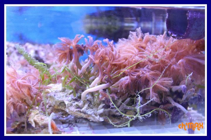 ce que j'amène en coraux a orchie  213306PXRIMG0058GF