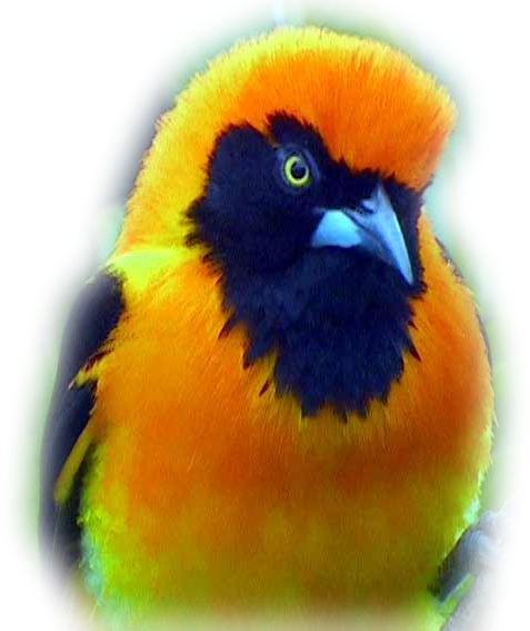 Tubes rapasse et oiseaux 215065Mellmelgibson131