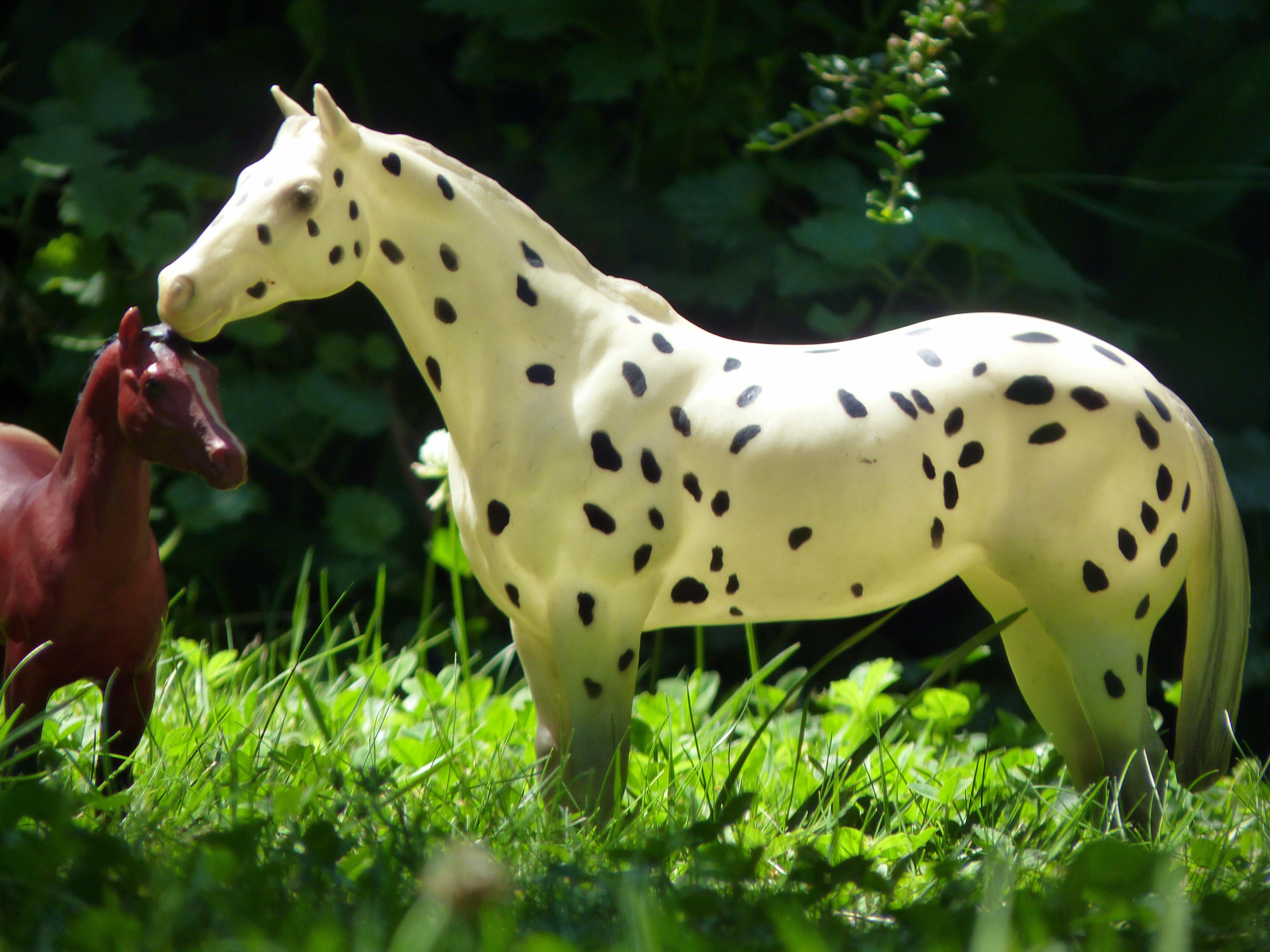 les chevaux de l'écurie Du vieux porche, bienvenue dans ce refuge miniature - Page 2 215263P1060532