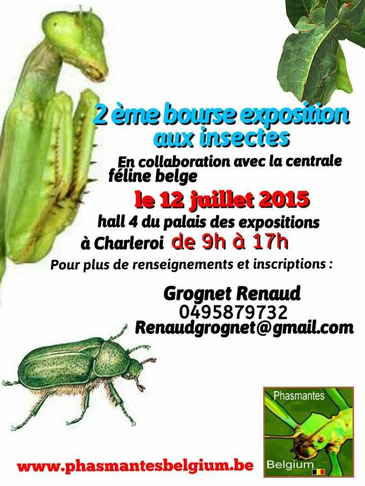 Bourse de charleroi Insectes (12 juillet 2015) 218438bourseinsecte